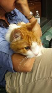 Itty Bitty Kitty waits to board an Alaska Airlines flight to Chicago.