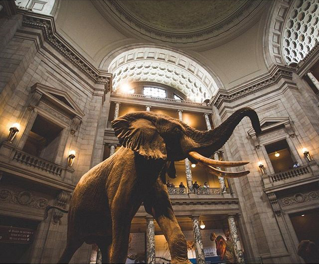 Played with Elephants at the National Museum of Natural History.