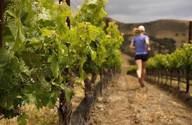 Today I had the pleasure of touring a winery in the American Riviera. The vineyards were so beautiful that I just had to do a little jog through the grounds --- followed by tasting some delicious wine, of course!