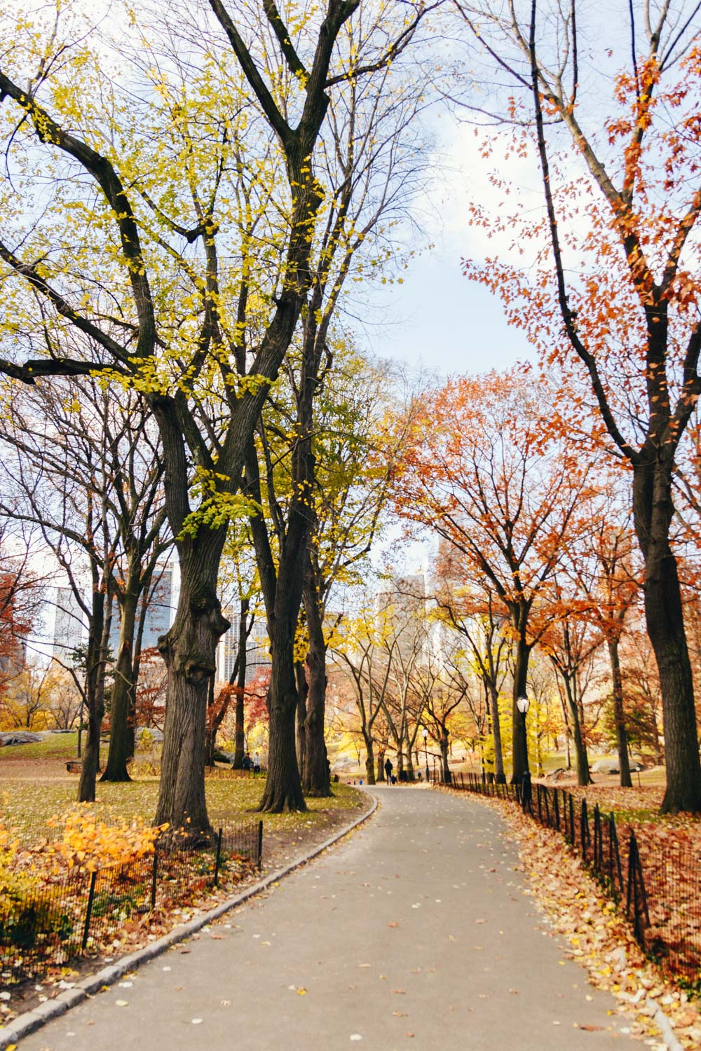 Trying to hold on to the last colors of fall before the snow gets here. We took a nice long walk through Central Park for our last day here.