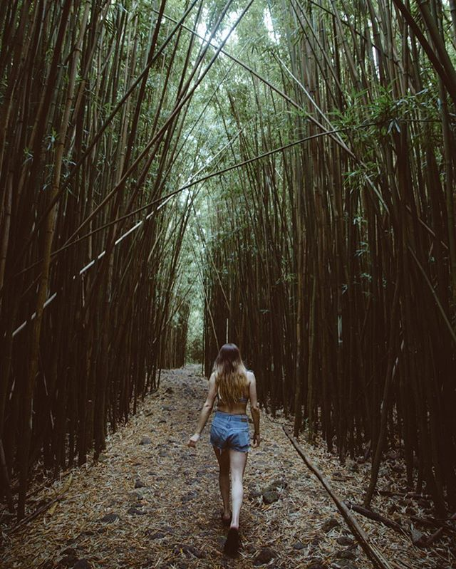 Wandering through bamboo forests in Maui .