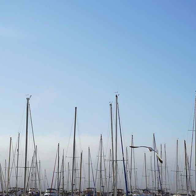 A photo of the tops of boats along Market Street in San Francisco.