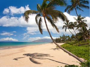 Photo of palm tree on a beach in Hawaii