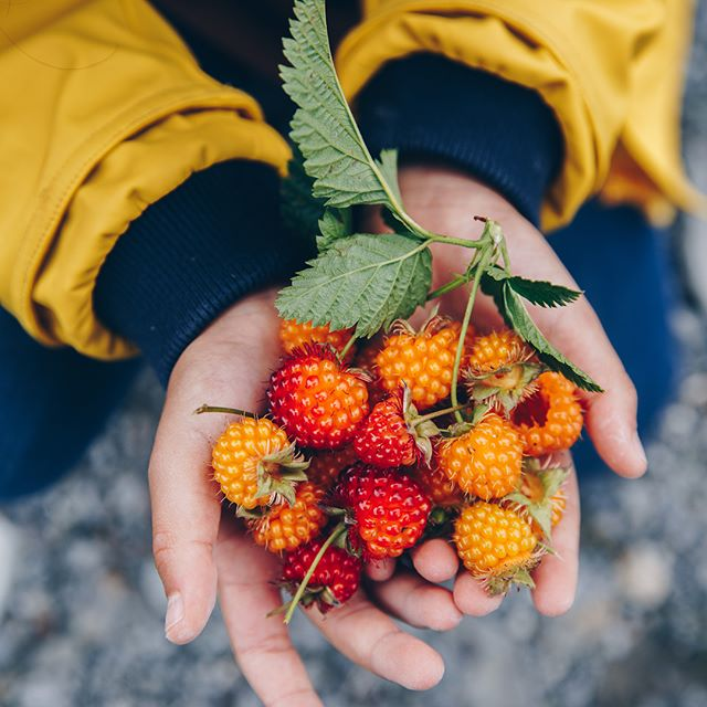 Photo of a child holding bright red and yellow berries in their hands.