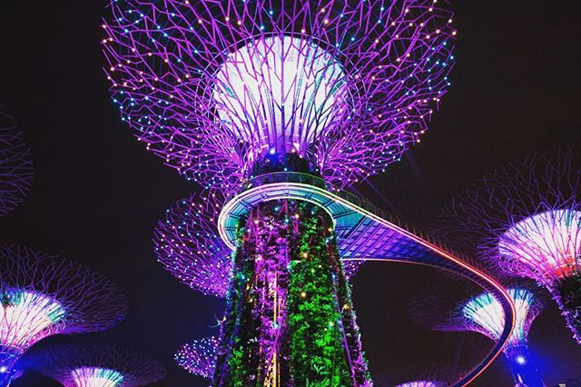 This is a photo of lighted structure decorated in purple and green lights. The structure looks like a tree-like figure with a long stem and lighted branches at the top.